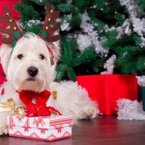 lifestyle gifting yourself new dog