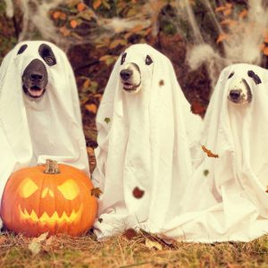lifestyle halloween dogs