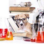 nutrition bioavailability chelation healthy diet dog