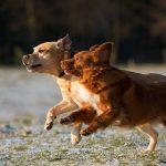 nutrition gut health probiotics prebiotics dogs