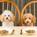 nutrition health benefits combination diet dogs