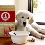 nutrition health benefits dog meal do only good pet food