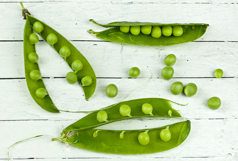 nutrition peas plant protein dogs