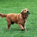 nutrition protein sources taurine dogs